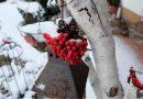 Gimmicks – nicht nur zu Weihnachten